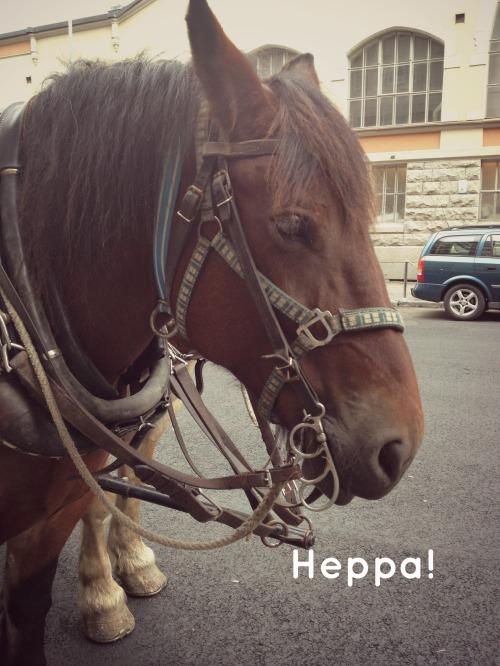 heppa